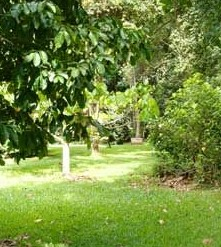 Kingfisher Park Birdwatchers Lodge - Byron Bay Accommodations