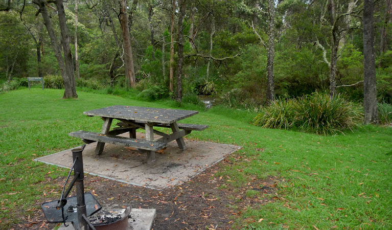 Chaelundi campground - Byron Bay Accommodations