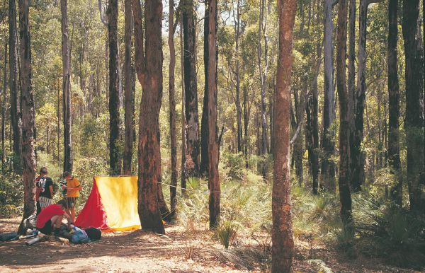 Nanga Mill Camp at Lane Poole Reserve - Byron Bay Accommodations