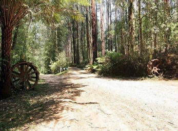 Hill n Dale Farm Cottages - Byron Bay Accommodations
