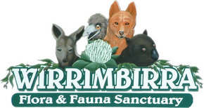 Wirrimbirra Sanctuary - Byron Bay Accommodations