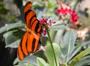 Butterfly Farm - Byron Bay Accommodation