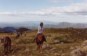 High Country Horses - Byron Bay Accommodations