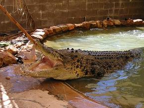 Wyndham Zoological Gardens and Crocodile Park - Byron Bay Accommodations