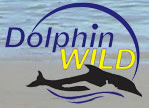 Dolphin Wild - Byron Bay Accommodations
