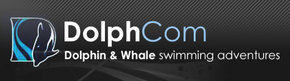 Dolphcom - Dolphin  Whale Swimming Adventures - Byron Bay Accommodations