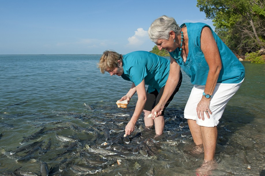 Aquascene Fish Feeding Sanctuary - Byron Bay Accommodations