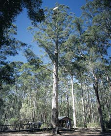Diamond Tree Lookout Manjimup - Byron Bay Accommodations