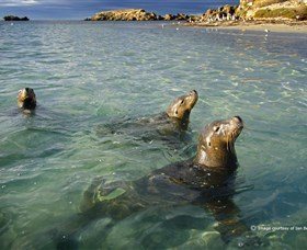 Shoalwater Islands Marine Park - Byron Bay Accommodations