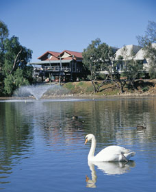 White Swans - Byron Bay Accommodations