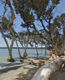Stokes National Park - Byron Bay Accommodations