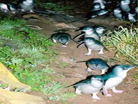 Penneshaw Penguin Centre - Byron Bay Accommodations
