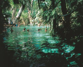 Mataranka Thermal Pool - Byron Bay Accommodations