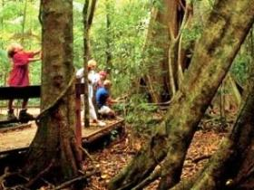 Mary Cairncross Scenic Reserve - Byron Bay Accommodations