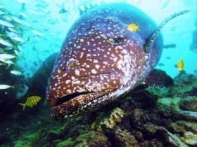 Lady Musgrave Island Dive Sites - Byron Bay Accommodations