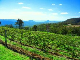 Preston Peak Wines - Byron Bay Accommodations