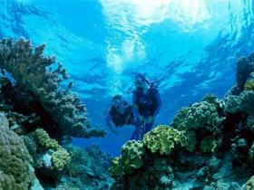 Coral Gardens Dive Site - Byron Bay Accommodations