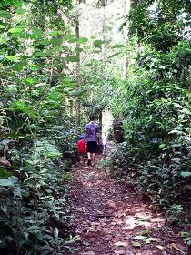 Malanda Falls Rainforest Walk Malanda Falls Conservation Park - Byron Bay Accommodations