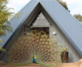Halls Gap Zoo - Byron Bay Accommodations