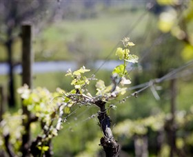 Norton Estate Wines - Byron Bay Accommodations