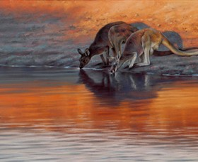 Steve Morvell Wildlife Art - Byron Bay Accommodations