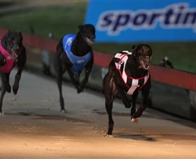Dapto Dogs - Byron Bay Accommodations