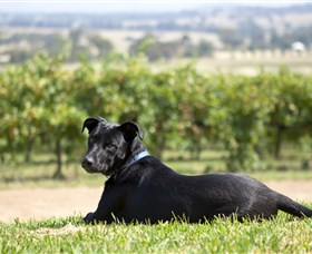 Moothi Estate Vineyard and Cellar Door - Byron Bay Accommodations