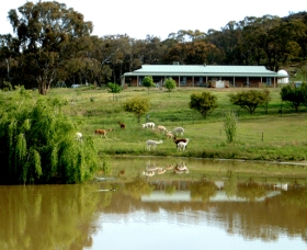 Clearview Alpacas - Byron Bay Accommodations