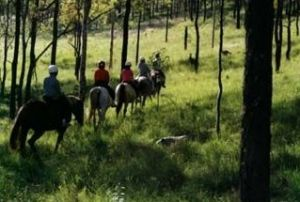Hunter Valley Horse Riding and Adventures - Byron Bay Accommodation