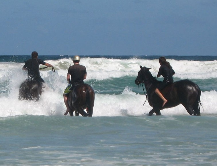 Pegasus Park Equestrian Centre - Byron Bay Accommodations