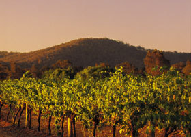 Taltarni Vineyards - Byron Bay Accommodations