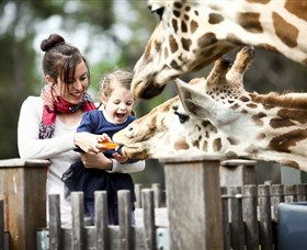 Taronga Western Plains Zoo Dubbo - Byron Bay Accommodations