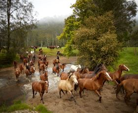 Glenworth Valley Horse Riding - Byron Bay Accommodations