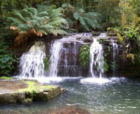 Barrington Tops National Park Walks - Byron Bay Accommodations