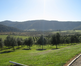 Hastings Valley Olives - Byron Bay Accommodations