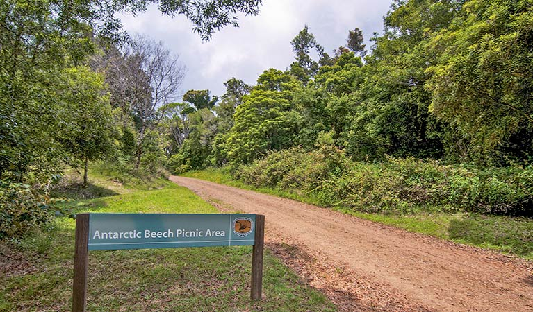 Antarctic Beech picnic area - Byron Bay Accommodations