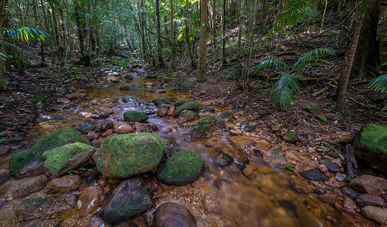 Starrs Creek picnic area - Byron Bay Accommodations