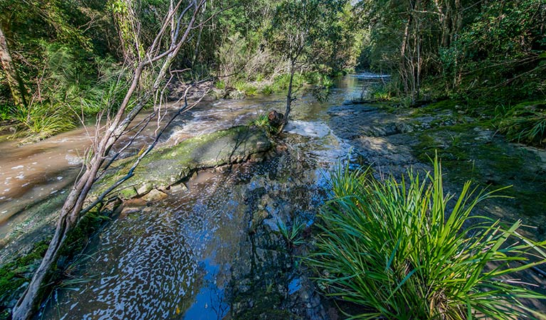 Dawson River walking track - Byron Bay Accommodations