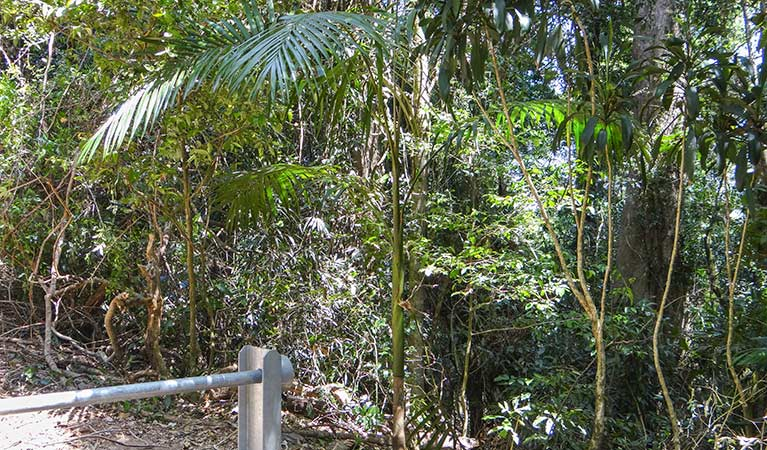 Goorgana walking track - Byron Bay Accommodations