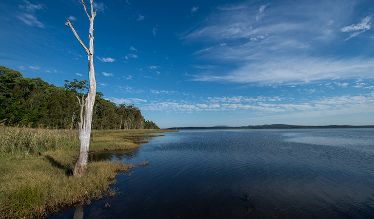 Lake Innes Nature Reserve - Byron Bay Accommodations