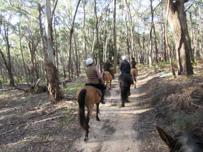 Silver Brumby Trails - Byron Bay Accommodations