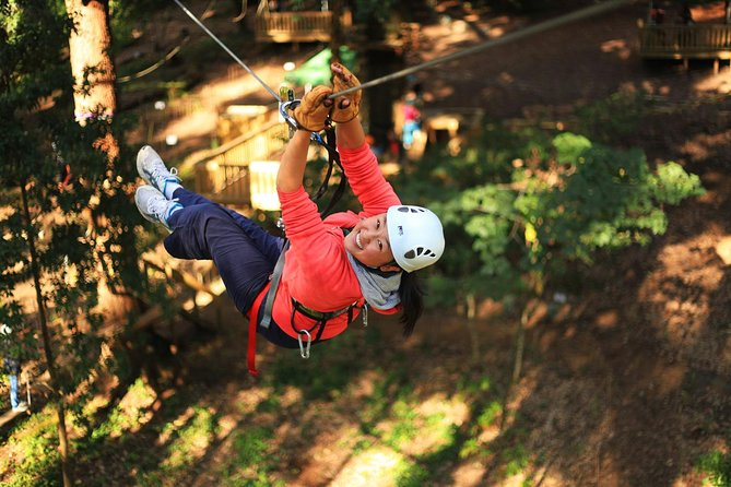 Trees Adventure Lane Poole Park - Treetop  Zipline Experience - Byron Bay Accommodations