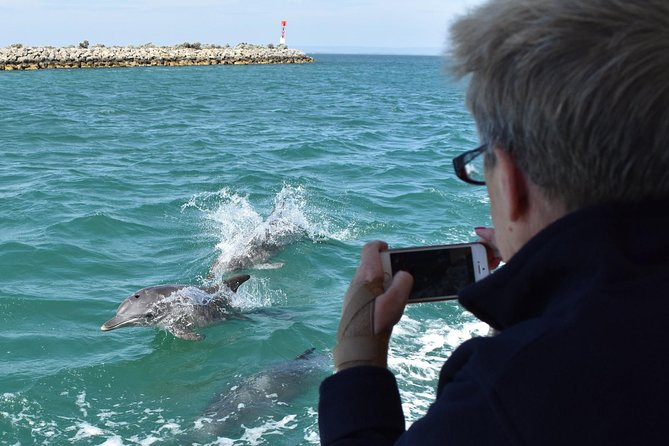 Mandurah Dolphin Island Adventure - Byron Bay Accommodations