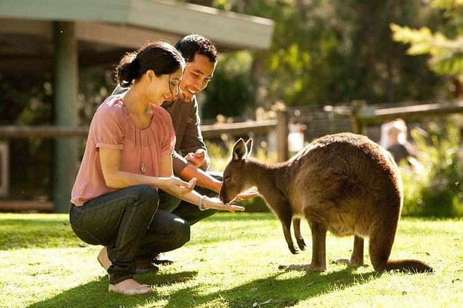 Very Best of Perth Tour - Wildlife Park  City Highlights Tour - Byron Bay Accommodations