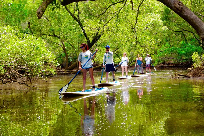 Byron Stand Up Paddle Nature Tour - Byron Bay Accommodations