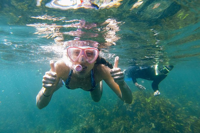 Manly Snorkel Trip and Nature Walk with Local Guide - Byron Bay Accommodations