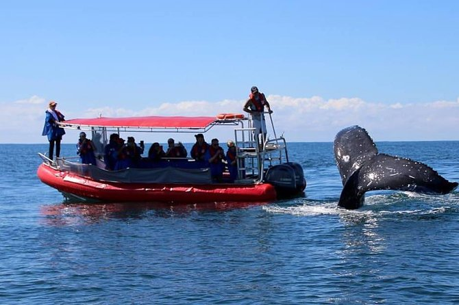 Byron Bay Whale Watching Cruise - Byron Bay Accommodations