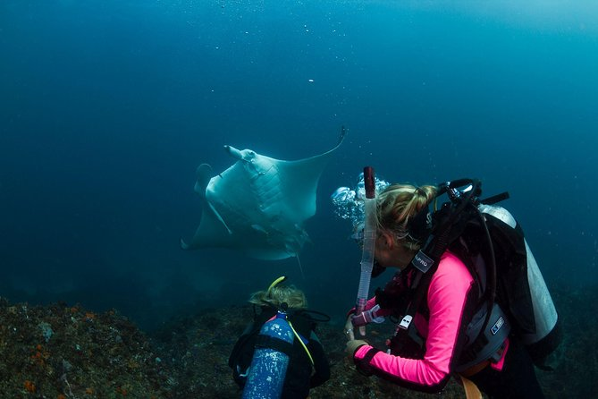 5-Hour Byron Bay Introductory Scuba Diving Tour - Byron Bay Accommodations