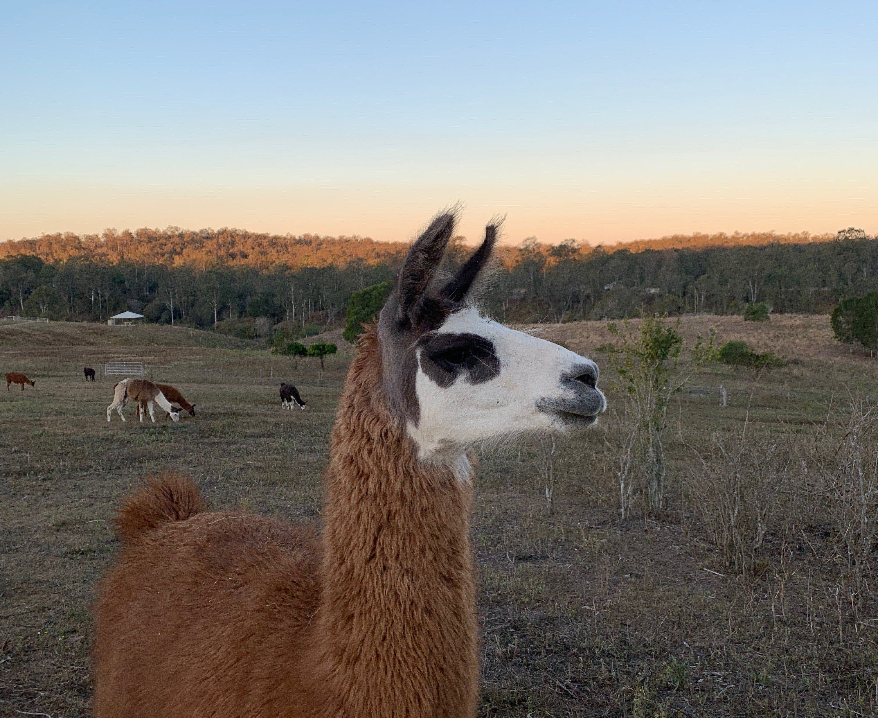 The Llama Farm - Byron Bay Accommodations