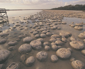Lake Clifton Thrombolites - Byron Bay Accommodations